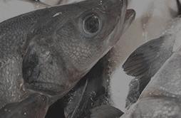 Des poissons ultra frais